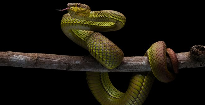 Δημόσια υπάλληλος λέει ότι φίδι έφαγε κρατικό χρήμα που χάθηκε — ΣΚΑΪ (www.skai.gr)