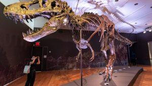 """Στο """"σφυρί"""" σκελετός τυραννόσαυρου Ρεξ – Κατακυρωθηκε έναντι 28 εκατ. δολαρίων"""